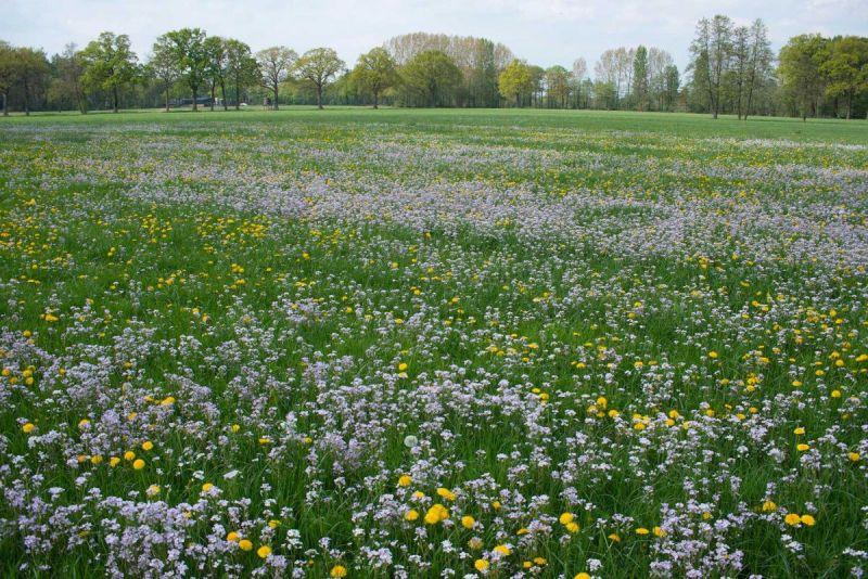 Weide-met-pinksterboemen-en-paardebloemen-kl